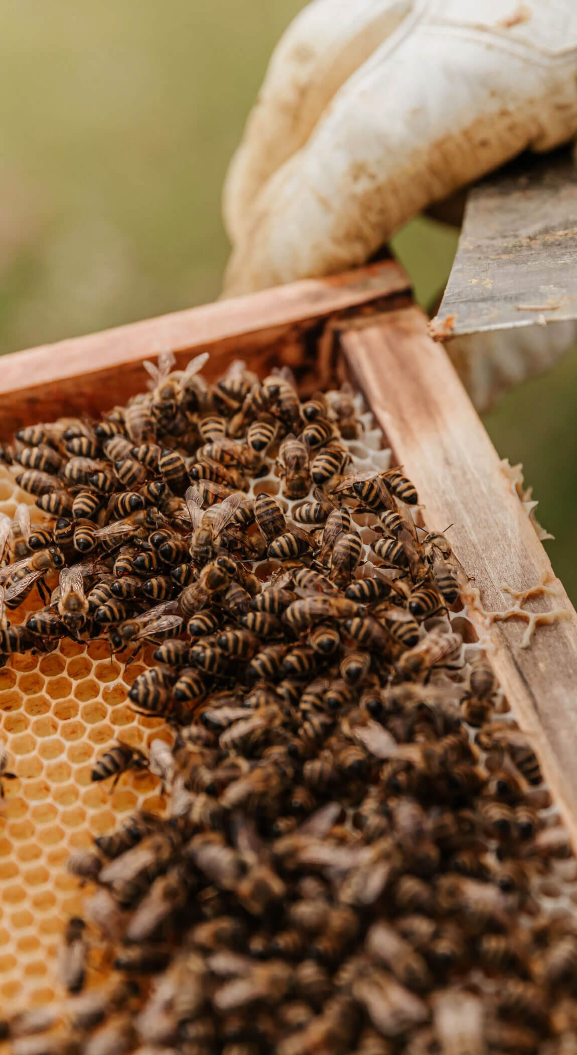 farm-bees